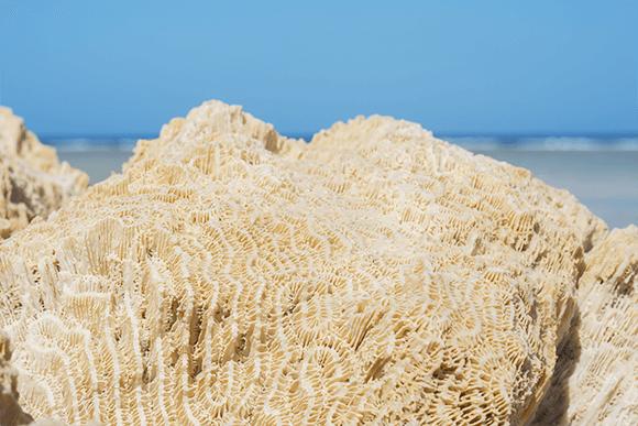 化石サンゴパウダー