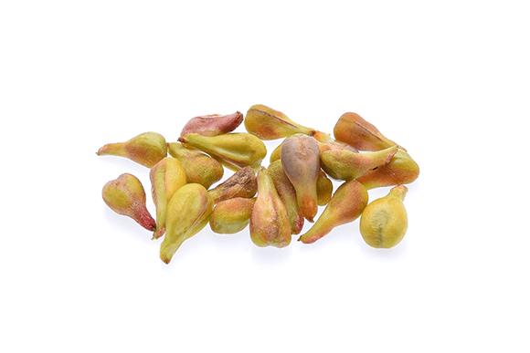 ブドウ種子
