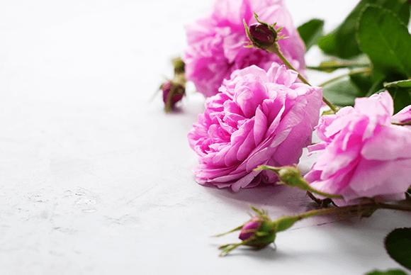 バラ花びらエキス(ローズエキス)
